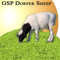 GSP Dorper Sheep Icon
